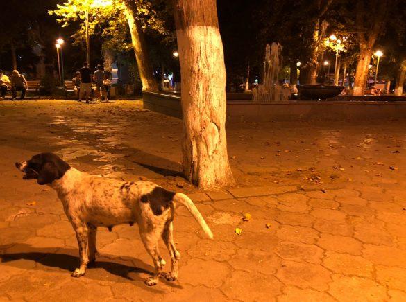 Dogs in Kutaisi