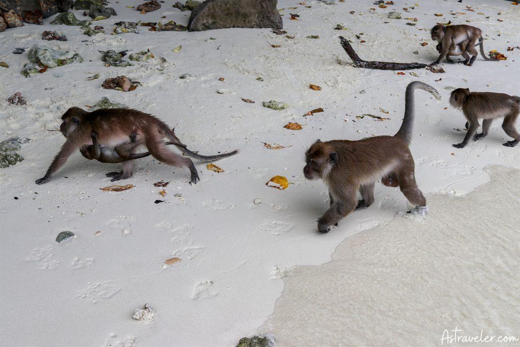 Monkey Island Monkeys